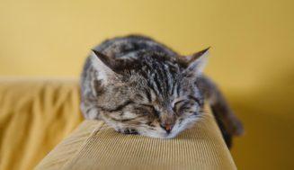 5 λόγοι για τους οποίους η ζωή μέσα στο σπίτι είναι ό,τι καλύτερο για τη γάτα σου