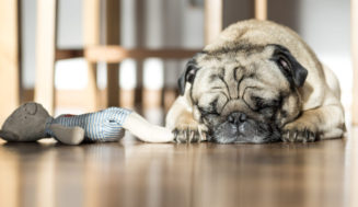 5 σημάδια ότι το κατοικίδιό σου πονάει